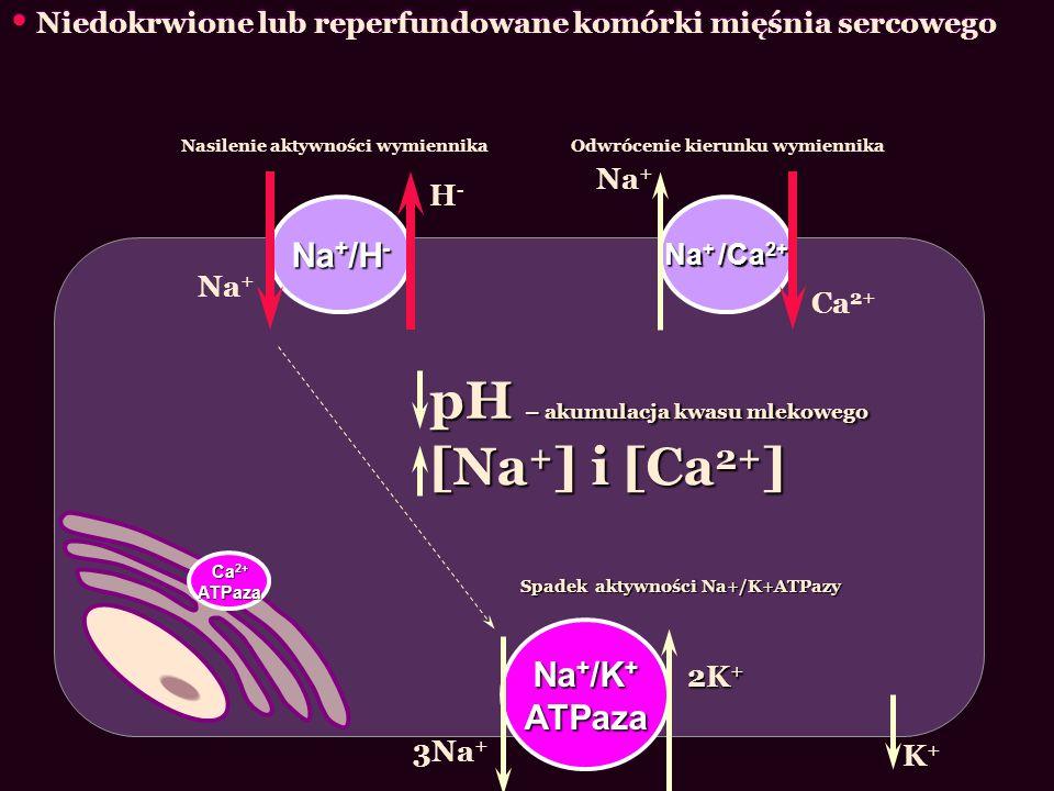 pH – akumulacja kwasu mlekowego [Na+] i [Ca2+]